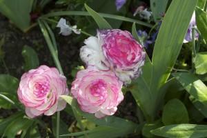 Jardin de Monet, photo Martine Bernier