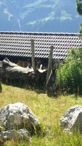 Le kangourou caméléon se trouve... devant le poteau!