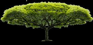 arbre-plat